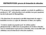 ERITROPOYESIS: proceso de formación de eritrocitos