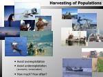 Harvesting of Populations