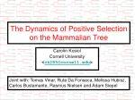 The Dynamics of Positive Selection on the Mammalian Tree