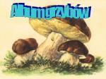 Album grzybów