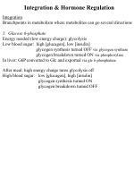 Integration & Hormone Regulation