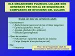 Divisió cel·lular als vertebrats adults Constantment