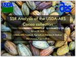 SSR Analysis of the USDA-ARS Cacao collection