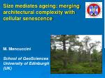 Size mediates ageing: merging architectural complexity with cellular senescence M. Mencuccini