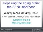 Repairing the aging brain: the SENS approach Aubrey D.N.J. de Grey, Ph.D.