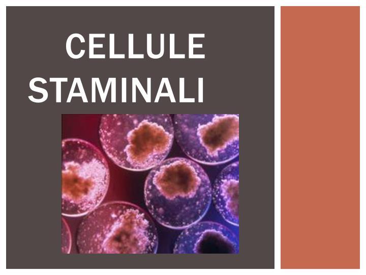 cellule staminali n.