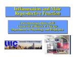 Inflammation and Male Reproductive Function