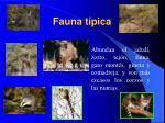 Fauna típica