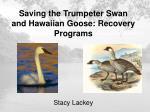 Saving the Trumpeter Swan and Hawaiian Goose: Recovery Programs