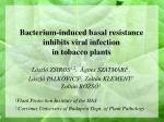 Bacterium-induced basal resistance inhibits viral infection in tobacco plants
