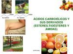 ÁCIDOS CARBOXÍLICOS Y SUS DERIVADOS (ESTERES,TIOÉSTERES Y AMIDAS)