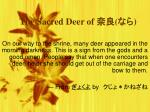 The Sacred Deer of 奈良 ( なら )