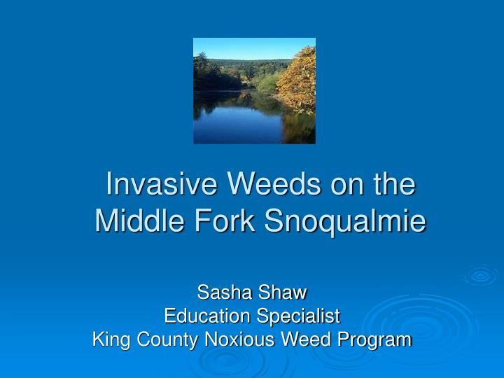 invasive weeds on the middle fork snoqualmie n.