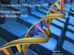 UConn BioGrid REU Summer 2008 Primer Design for Multiplex  PCR